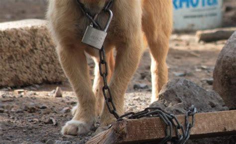 imagenes del animal weta maltrato animal y sus consecuencias la voz del silencio en