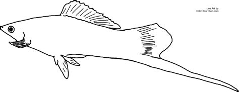 freshwater fish coloring pages