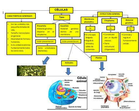 cuadro coseptual se celula ciencias biol 211 gicas del saber la c 201 lula