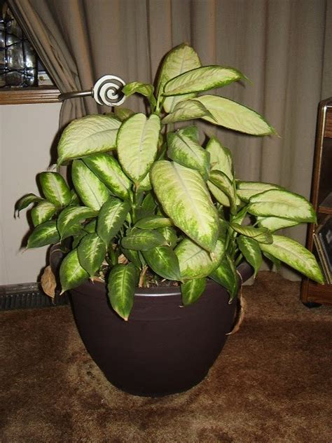 house plants that are poisonous to dogs house plants poisonous to dogs 28 images 10 indoor plants that are poisonous and