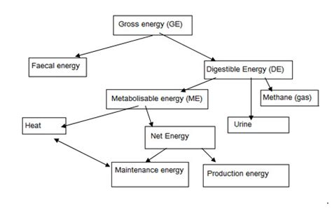 carbohydrates in energy production www infonet biovision org 201205 animal nutrition and