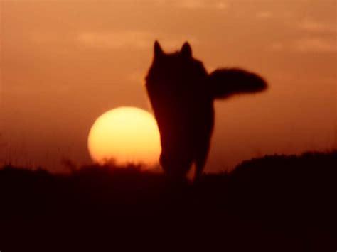 imagenes de lobos llorando el susurro de las cucarachas la situaci 243 n del lobo
