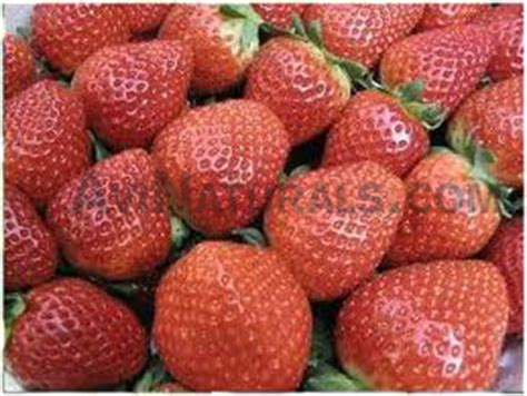 Chagne Floral Fruity 250ml strawberry wholesale supplier and manufacturer in india