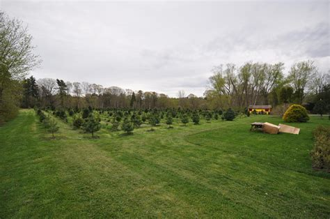 pick or cut your own christmas tree farms south of boston