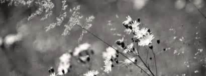 black white flowers cover for timeline