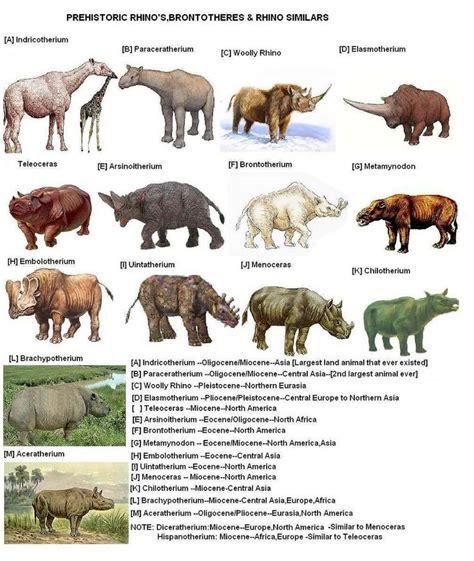 extinct mammals related keywords suggestions extinct mammals long related keywords suggestions for prehistoric rhinos