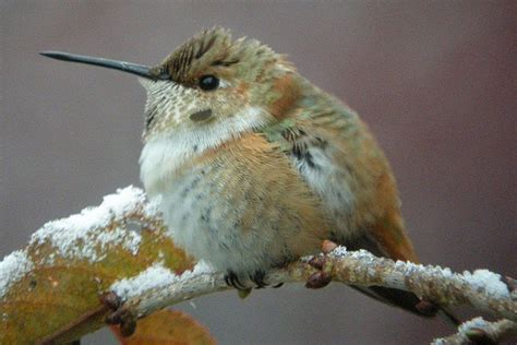 when to remove hummingbird feeders