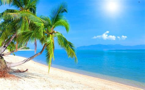 with palm tree island best tropical islands you must visit this year traveler