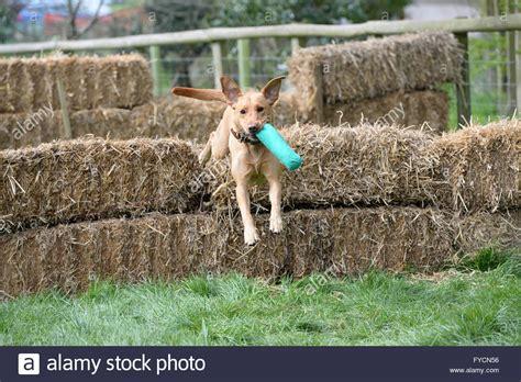hay bale dog house straw bale dog house noten animals