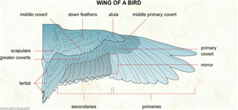 wing diagram bird anatomy diagram bird get free image about wiring