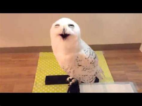 owl making funny faces – 1funny.com