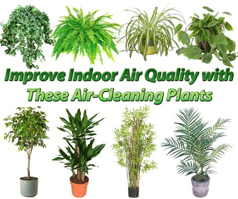 indoor plants to clean air 15 best air purifying plants our service company