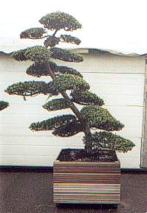 piante per giardino giapponese piante giapponesi
