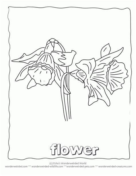 ed hardy coloring page ed hardy rose coloring pages sketch coloring page