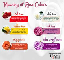 meaning of color of roses meaning of colors visual ly