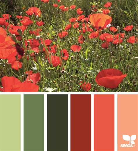 poppy palette design seeds