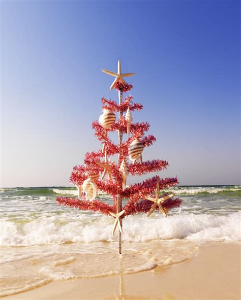 christmas tree on the beach san diego travel blog