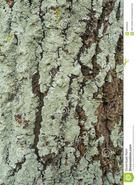 green tree bark stock photo image of trunk cracked