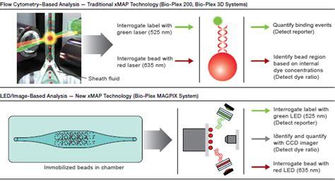 multiplex bead array multiplex immunoassays lsr bio rad