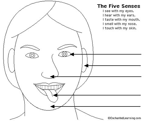 5 senses coloring pages bestofcoloring com five senses coloring pages download hd coloring gallery