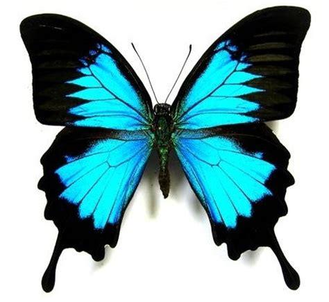 imagenes de mariposas oscuras decoraciones con mariposas lacelebracion com