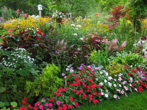 Gardenia Annual Or Perennial Annuals Like Colorful Impatiens Fill Out The Front Edges