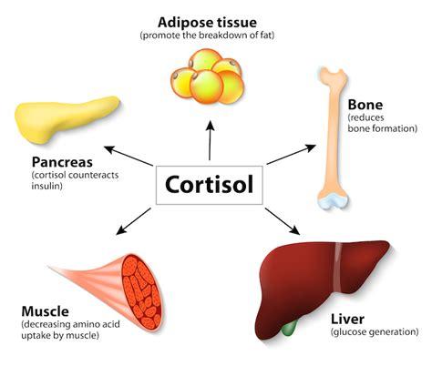 healthy fats hormones cortisol benefits of binge
