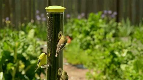 how cool is that goldfinches youtube