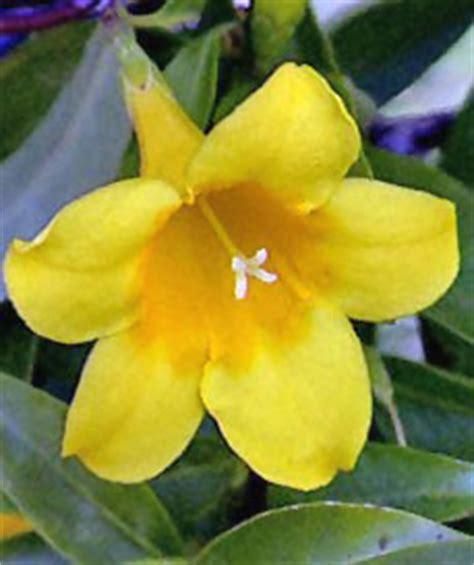 carolina flower this is south carolina thinglink