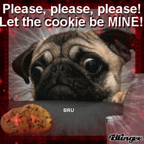 sassy pug gif let the cookie be mine by bru picture 129879078 blingee