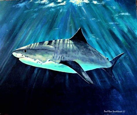 shark painting 533 best images about products i on
