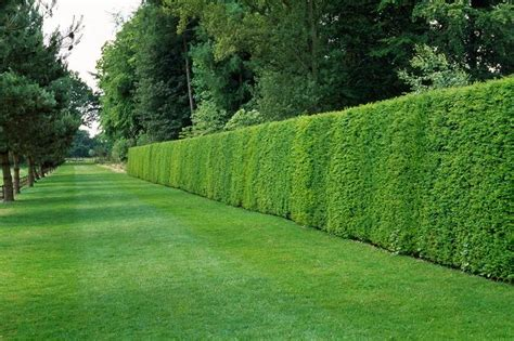 local gardener for garden services and maintenance hedge cutting trimming tidy gardens