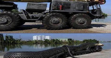 film ular laut ular gergasi di laut merah dibunuh download percuma