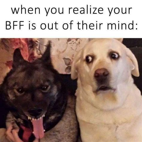 Bff Meme - when you realize your bff is out of their mind dog