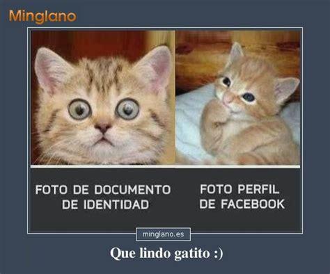 imagenes de gatos tristes con mensajes fotos de gatos con frases graciosas