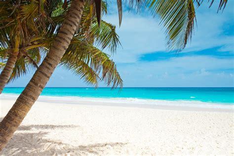 beach blue coast palm trees landscape caribbean sea