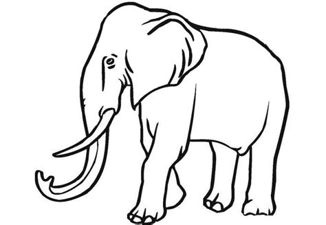 template of elephant elephant template animal templates free premium templates