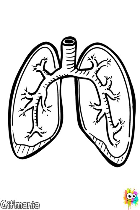 coloring pages of heart and lungs free coloring pages of heart and lungs