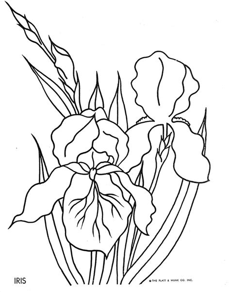 coloring pictures of iris flowers flowers to color q is for quilter