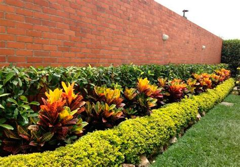 imagenes de barreras naturales 161 plantas ornamentales como barreras naturales en tu jard 237 n
