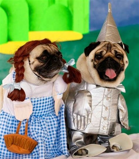my pug can t breathe 25 best ideas about pugs in costume on pug costume pug puppies and black pug