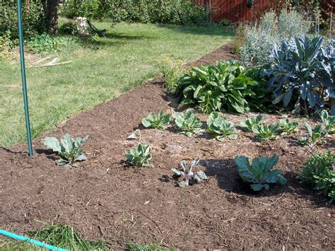 living the frugal life further thoughts on lasagna mulching