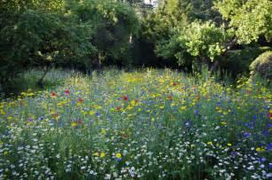 Wild Flower Meadow Seeds - colourful cornfield annual meadow create a wild flower
