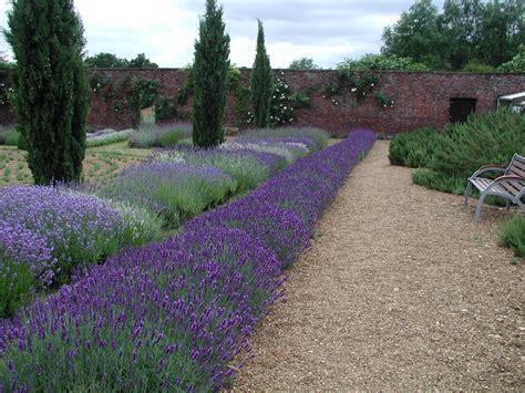 Garten Gestalten Lavendel by Gestalten Mit Lavendel Staudeng 228 Rtnerei Gai 223 Mayer