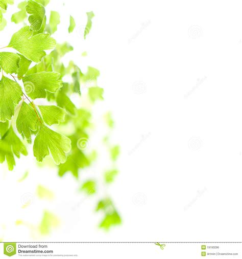 green leaves in light royalty free stock image image