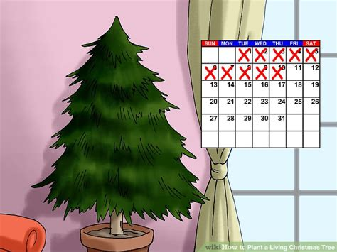 how to stop my live christmas tree from lening how to plant a living tree with pictures wikihow