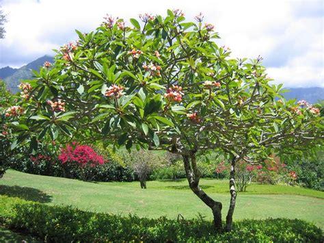 jenis tanaman yang cocok di tanam di depan rumah anda gosocio