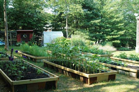 backyard farmers backyard organic farming backyard farming on an acre