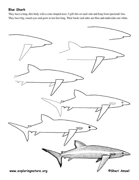 how to draw a doodle shark drawing painting sharks blue doodle drawing drawing