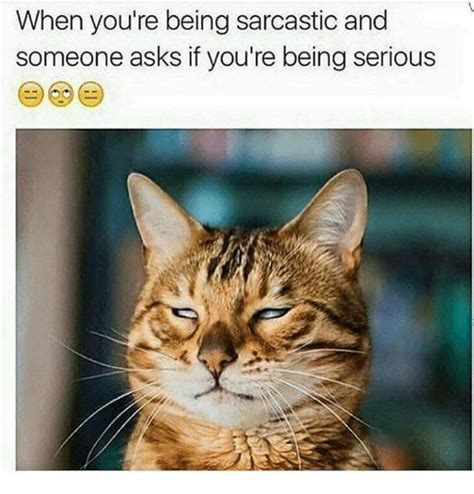 Sarcastic Cat Meme - when you re being sarcastic and someone asks if you re being serious grumpy cat meme on sizzle